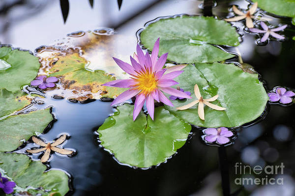 Photograph - Nymphaea Robert Strawn Selective Focus Landscape by Tim Gainey