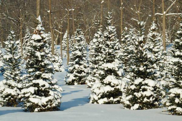 Wall Art - Photograph - O Christmas Tree by Beth Collins