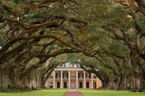 Louisiana Photograph - Oak Alley Plantation by Martin Podt