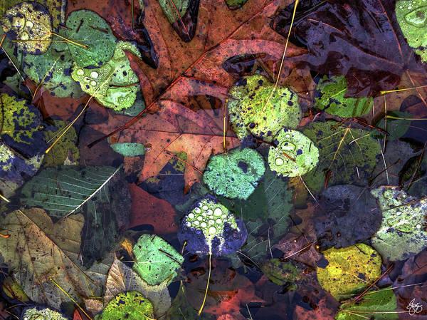 Photograph - Oak And Aspen Following Rain by Wayne King