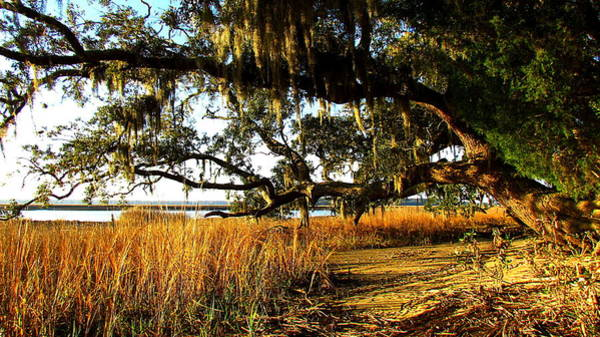 Wildlife Refuge Digital Art - Oak And Golden Marsh by Matt Richardson