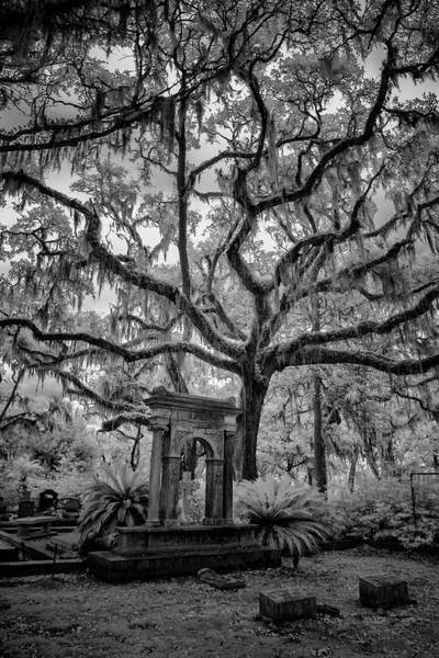 Photograph - Oak Cemetary II by Jon Glaser