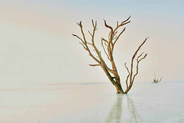 Wall Art - Photograph - Oak In The Ocean by Jon Glaser