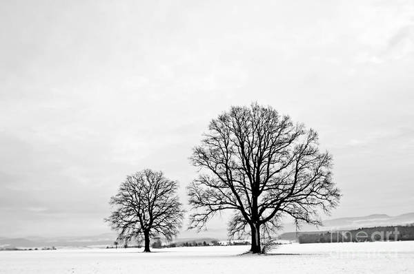 Wall Art - Photograph - Oak In Winter by Hjochen
