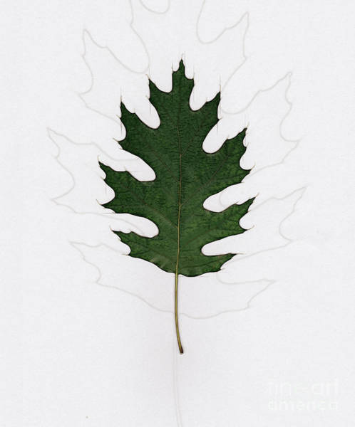 Wall Art - Photograph - Oak Leaf H3 by Humorous Quotes