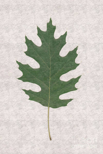 Wall Art - Photograph - Oak Leaf H5 by Humorous Quotes