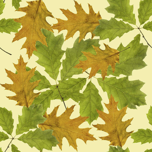 Fall Colors Mixed Media - Oak Leaves Patern by Christina Rollo