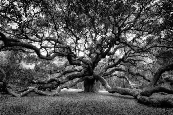 Photograph - Oak Of The Angels - Bw by Renee Sullivan