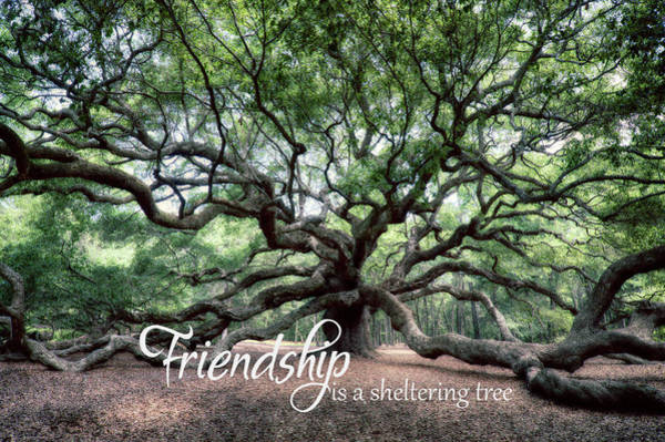 Photograph - Oak Of The Angels - Friendship Is A Tree by Renee Sullivan