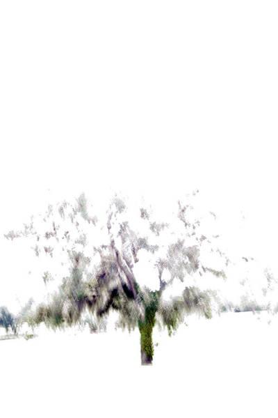Wall Art - Photograph - Oak Tree by Win-initiative
