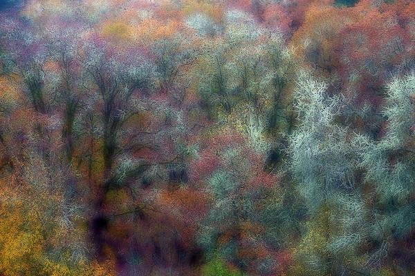 Wall Art - Photograph - Oak Trees Designs In Autumn Color by Darrell Gulin