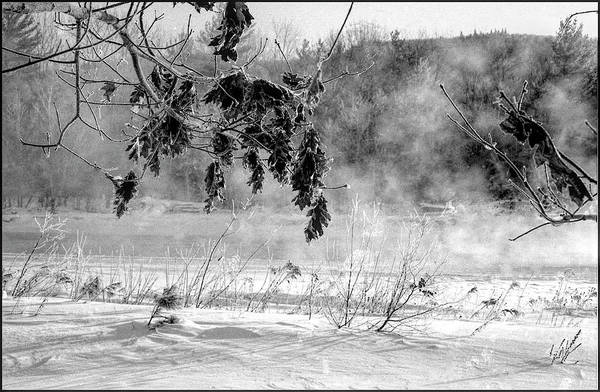 Photograph - Oaks Along The Pemigewasset River by Wayne King