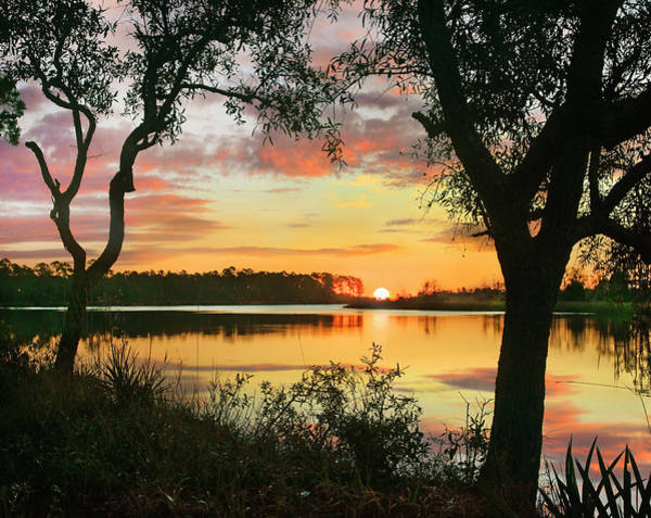 Wall Art - Photograph - Oaks At Sunrise, Ochlockonee River by Tim Fitzharris