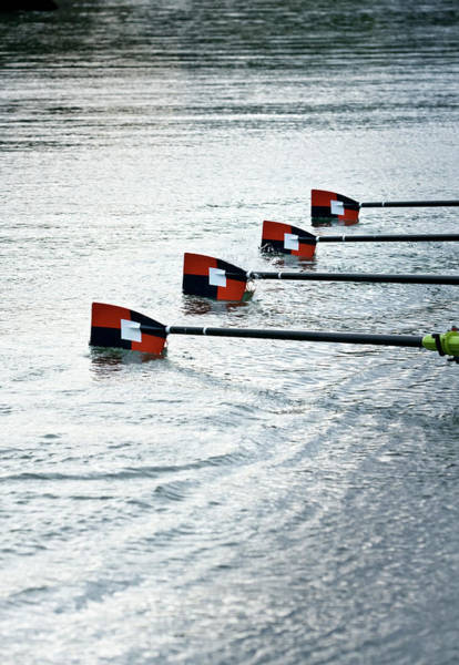 Rowing Wall Art - Photograph - Oar Blades Enter The Water by Anthony Bradshaw