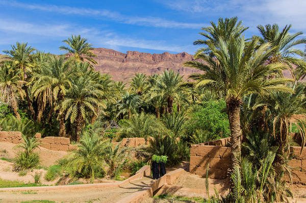 Casbah Photograph - Oasis Around Ouled Atmane Kasbah by Maremagnum