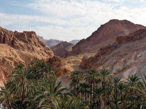 Tunisia Wall Art - Photograph - Oasis In Sahara Desert by Wellsie82