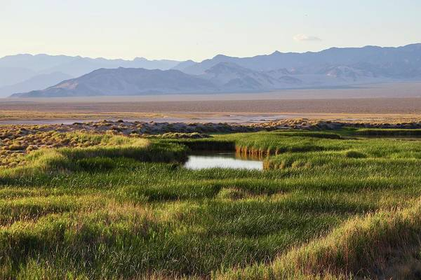 Photograph - Oasis In The Mojave by Sagittarius Viking