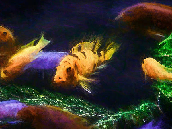 Digital Art - Ob Mbuna Cichlid Chalk Smudge by Don Northup