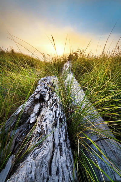Photograph - Ocean Driftwood by Debra and Dave Vanderlaan