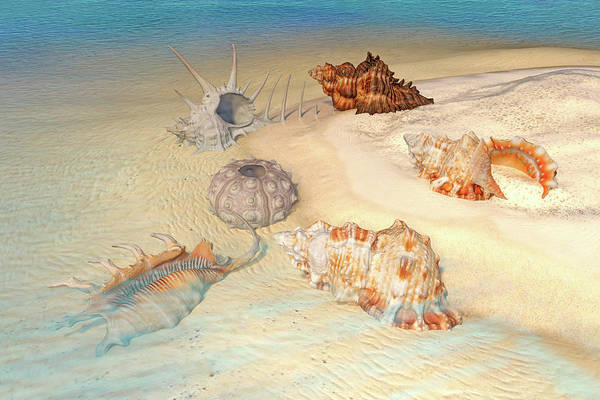 Wall Art - Digital Art - Ocean Shells by Betsy Knapp
