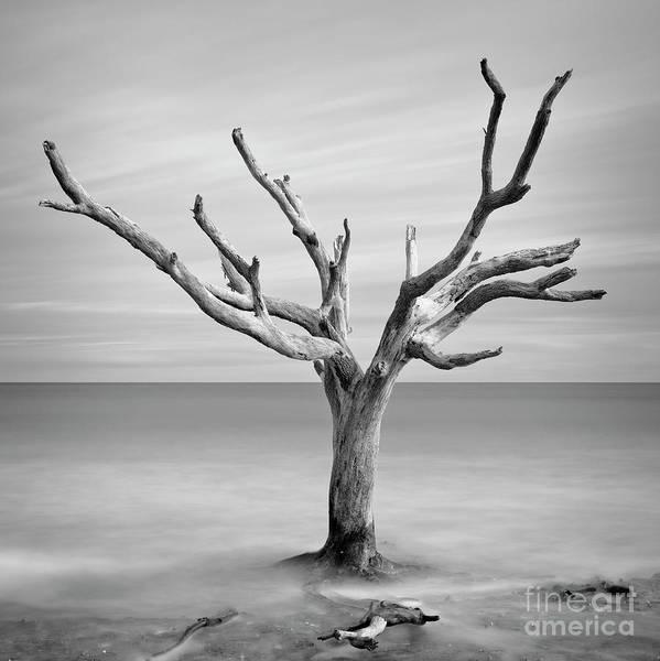 Photograph - Ocean Tree by Patrick M Lynch