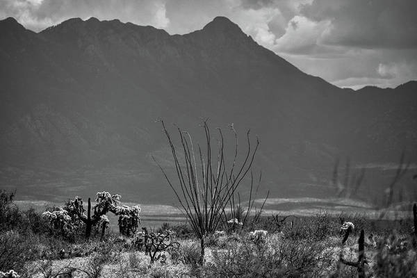 Photograph - Ocotillo And Mount Wrightson Black And White  by Chance Kafka