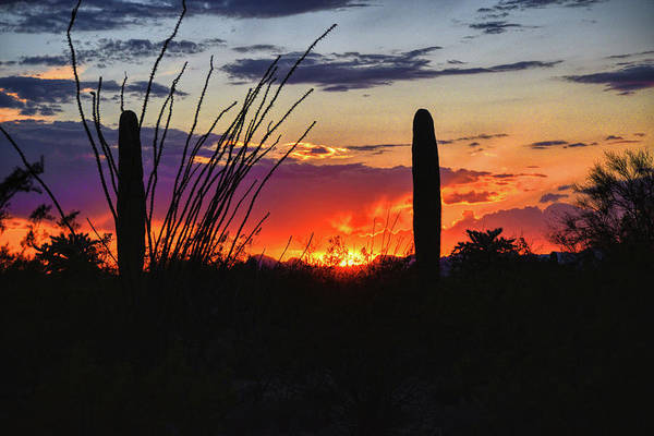 Photograph - Ocotillo Frames The Sunset by Chance Kafka