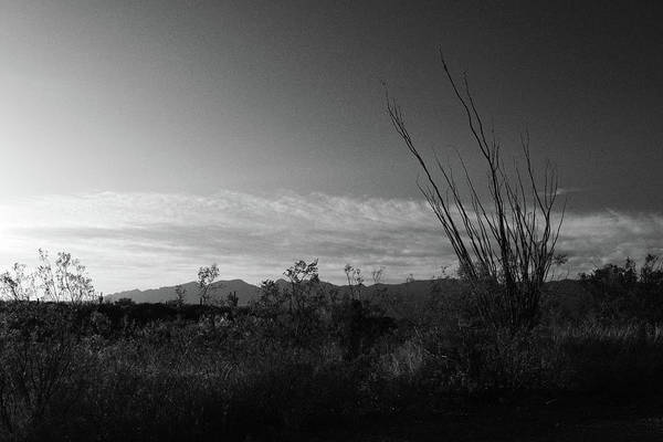 Photograph - Ocotillo In Black And White  by Chance Kafka