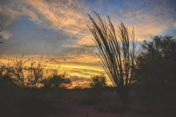 Photograph - Ocotillo Sunset by Chance Kafka