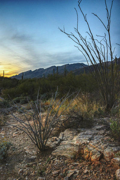 Photograph - Ocotillos Frame The Catalinas  by Chance Kafka
