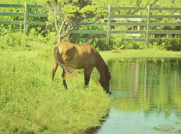 Photograph - Ocracoke Pony by JAMART Photography