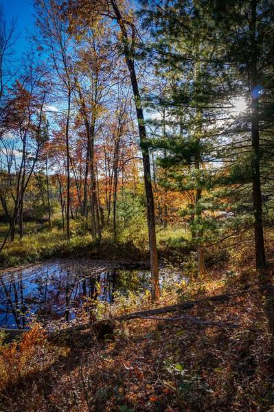 Photograph - October Late Afternoon by Kendall McKernon
