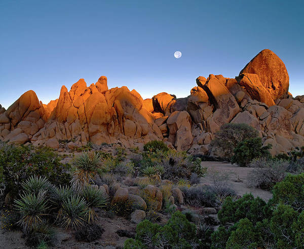 Photograph - October Moon - Joshua Tree N. P. by Paul Breitkreuz