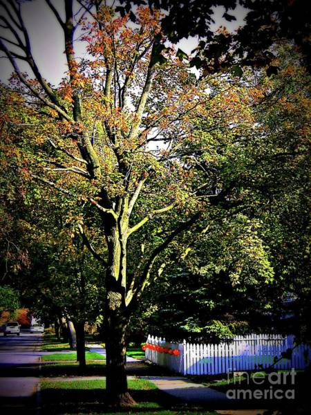Photograph - October Vibes by Frank J Casella