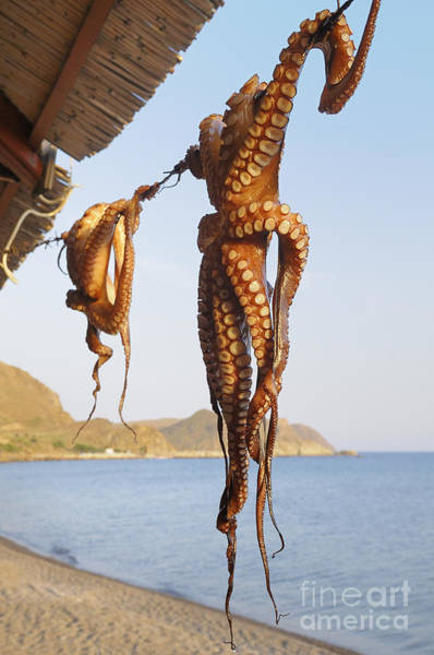Wall Art - Photograph - Octopus Drying In The Sun In The Greek by Stockcube