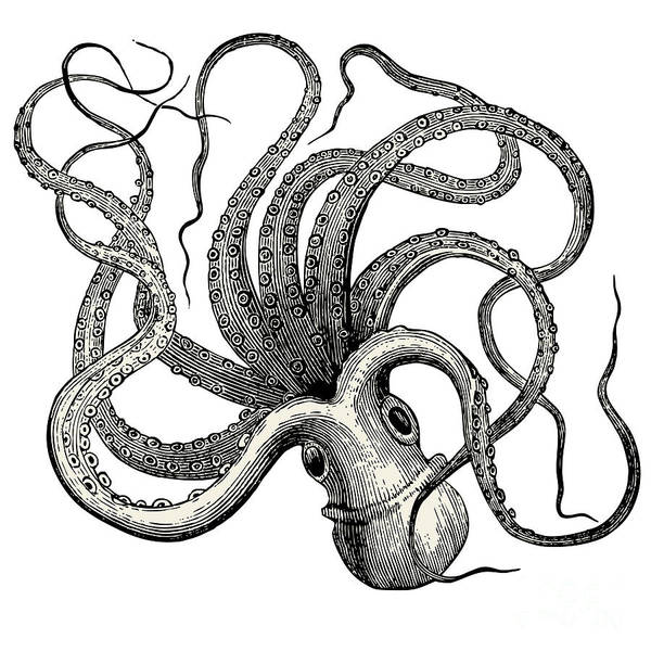Engraved Digital Art - Octopus Octopus Vulgaris - Vintage by Lynea