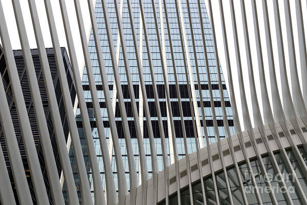 Photograph - Oculus Lines New York City by John Rizzuto