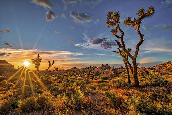 Photograph - Of Sunstars And Joshua Trees by Peter Tellone