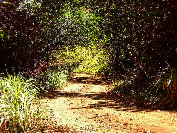 Photograph - Off The Back Road - Maui by Glenn McCarthy Art and Photography