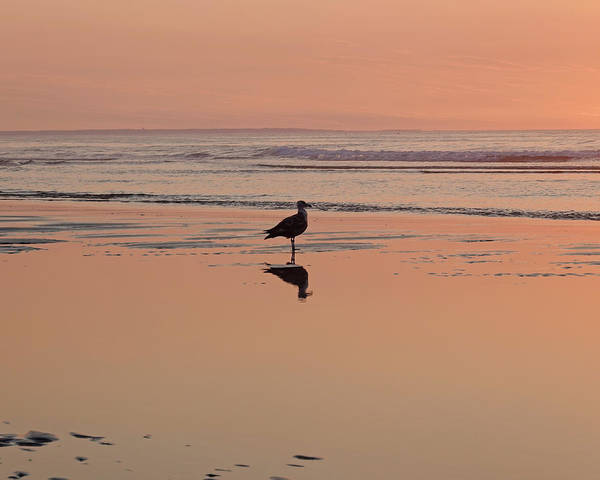 Photograph - Ogunquit Beach Seagull Reflection Ogunquit Maine Reflection by Toby McGuire