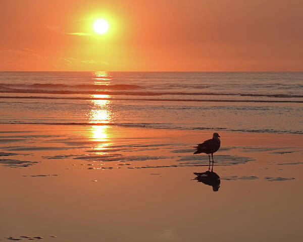 Photograph - Ogunquit Beach Seagull Reflection Ogunquit Maine by Toby McGuire