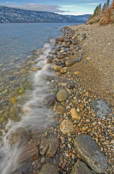 Photograph - Okanagan Centre Shoreline by Darrel Giesbrecht