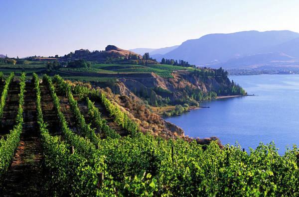 Okanagan Wall Art - Photograph - Okanagan Vineyards Winery Scenic by Laughingmango