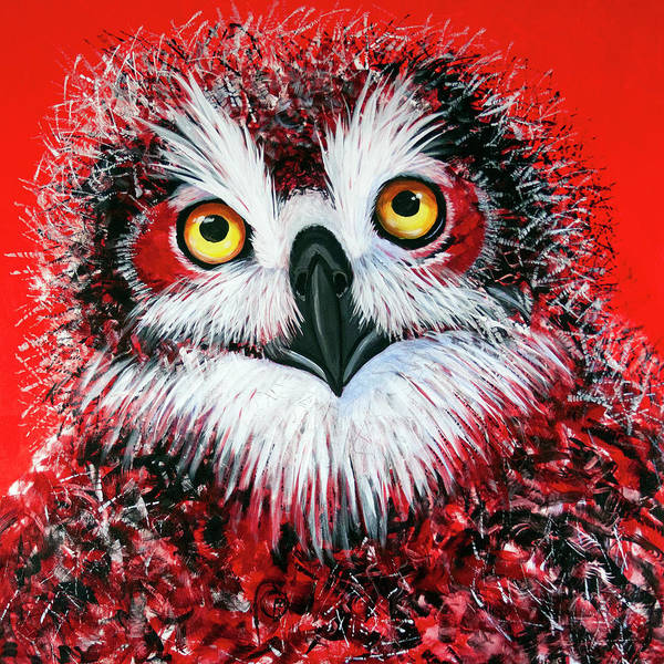Painting - Ol Owlet by Laurel Bahe