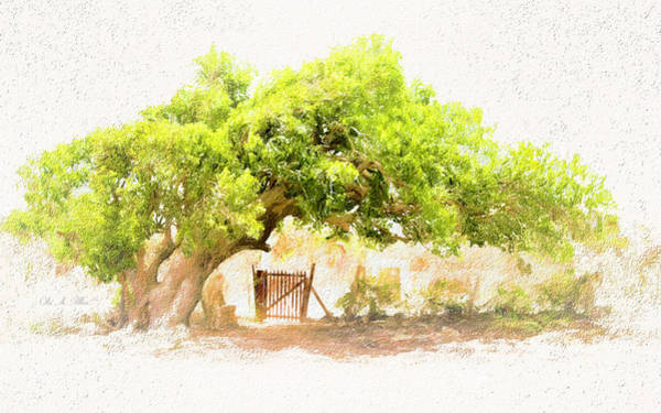 Photograph - Old Leaning Tree At Sandy Hill  Anguilla by Ola Allen