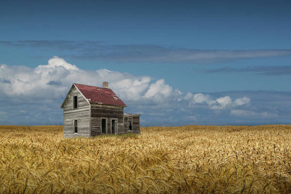 Photograph - Old Abandoned Prairie Farm House In A Wheat Field by Randall Nyhof
