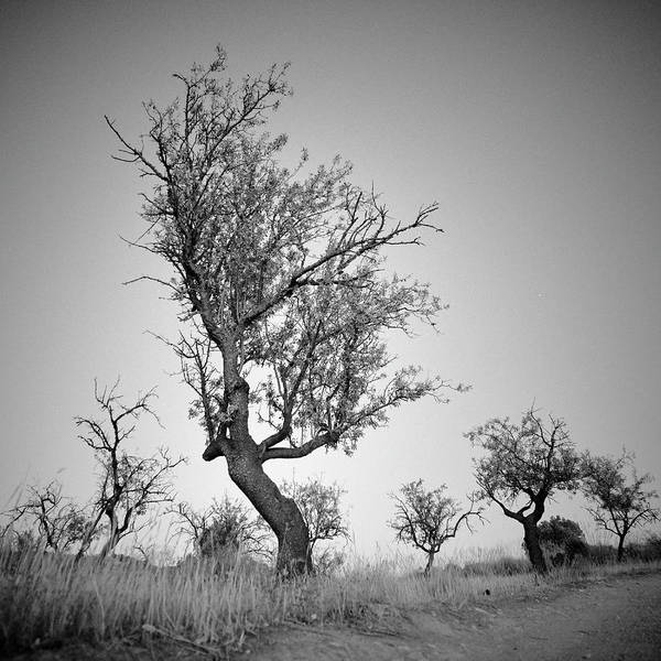 Wall Art - Photograph - Old Almonds..moonlight. Happy Valley. by Guido Montanes Castillo