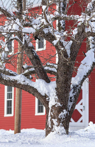 Wall Art - Photograph - Old Apple Tree Red Barn Winter In New Hampshire by Edward Fielding