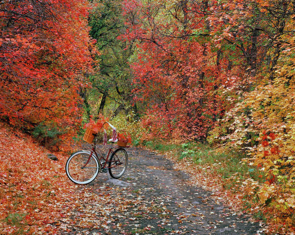 Photograph - Old Bike In Autumn by Leland D Howard