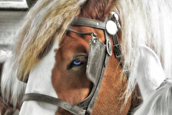 Photograph - Old Blue Eyes Savannah by JAMART Photography